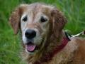 Rettungshunde_BM_Tag-1_018