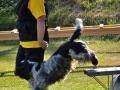Rettungshunde_BM_Tag-1_148