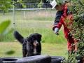 Rettungshunde_BM_Tag-2_002