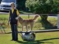 Rettungshunde_BM_Tag-2_112