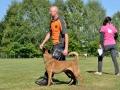 Rettungshunde_BM_Tag-2_151