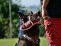 Rettungshunde-Staatsmeisterschaft_012