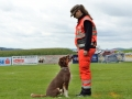 Rettungshunde-Staatsmeisterschaft_072