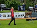 Rettungshunde-Staatsmeisterschaft_334