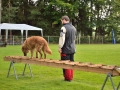 Rettungshunde-Staatsmeisterschaft_354
