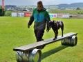 Rettungshunde-Staatsmeisterschaft_474
