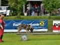 Rettungshunde-Staatsmeisterschaft_498