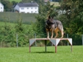 Rettungshunde-Staatsmeisterschaft_501